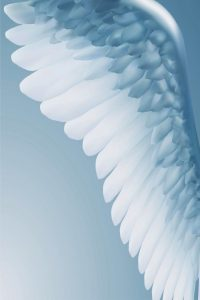 ángel www.jamaraturana.com
