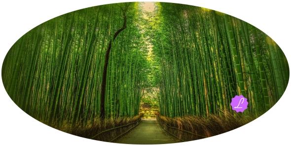 historia del bambú www.jamaraturana.com